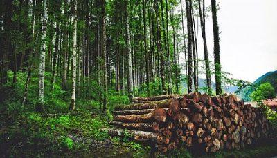 Clasificación de los árboles maderables