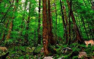 árboles maderables