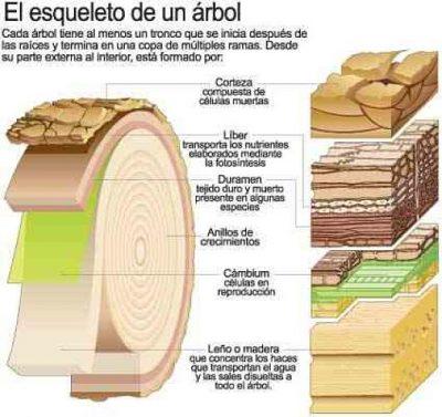 Diferencia química de la madera