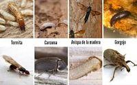 Insectos de la madera
