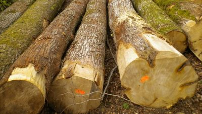 Elementos químicos de la madera
