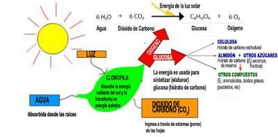 Propiedades químicas de la celulosa