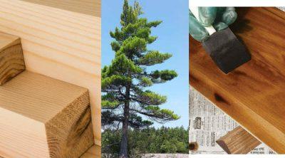 Tipos de arboles de madera blanda