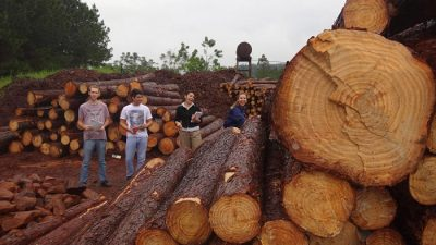 Transformación de la madera por la industria