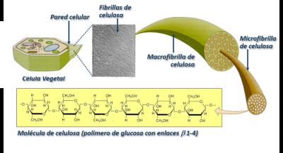 estructura molecular de la celulosa