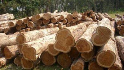 tipos de madera para construir muebles